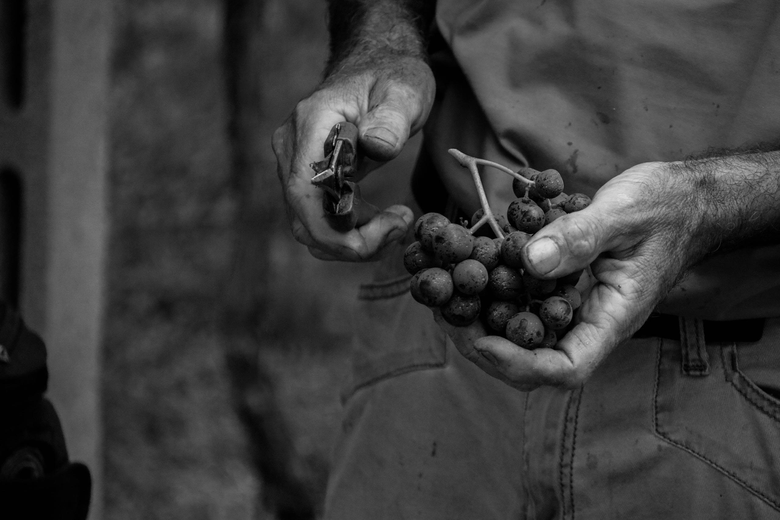 Mani viticoltore Corte Bravi