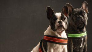 Pettorine per cani Tre Ponti