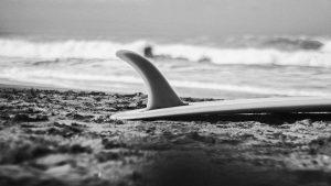 Tavola da surf Surf the Market